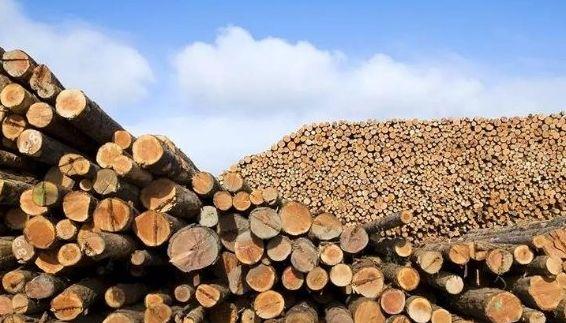 限制森林砍伐 中国向森林强国俄罗斯进口木材金昌
